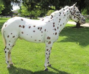 pelajes de los caballos