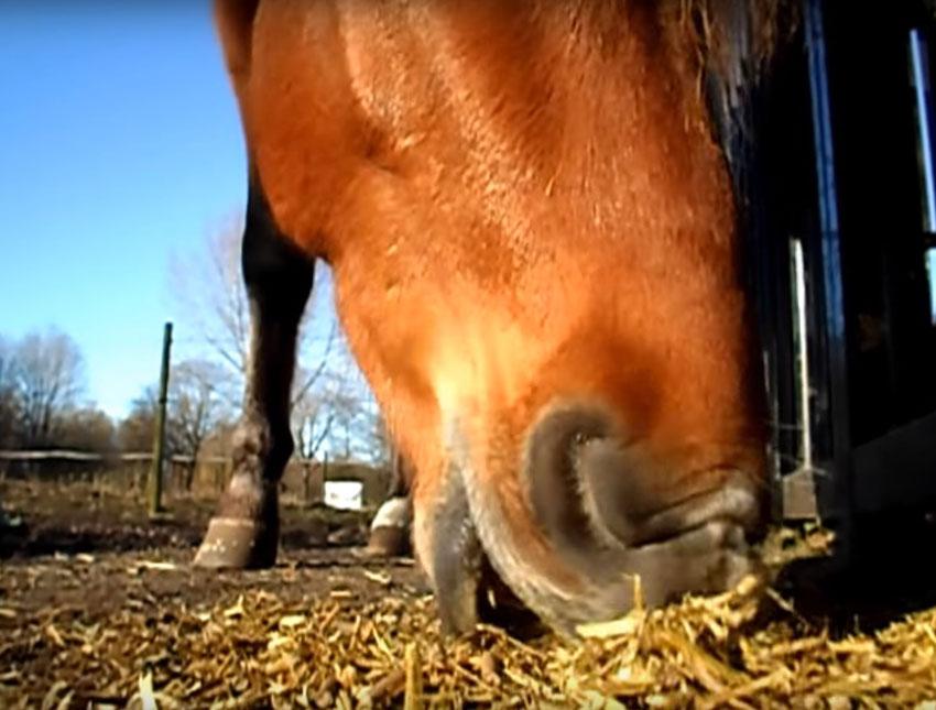 que costumbres tienen los caballos