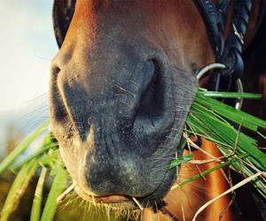 como se llama lo que comen los caballos