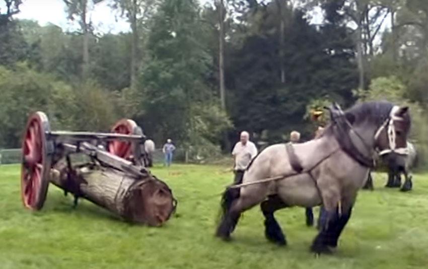 ¿Que comen los caballos?