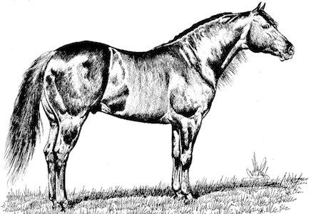 caballos mas caros del mundo