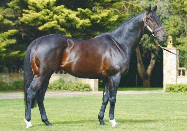 los caballos mas caros del mundo