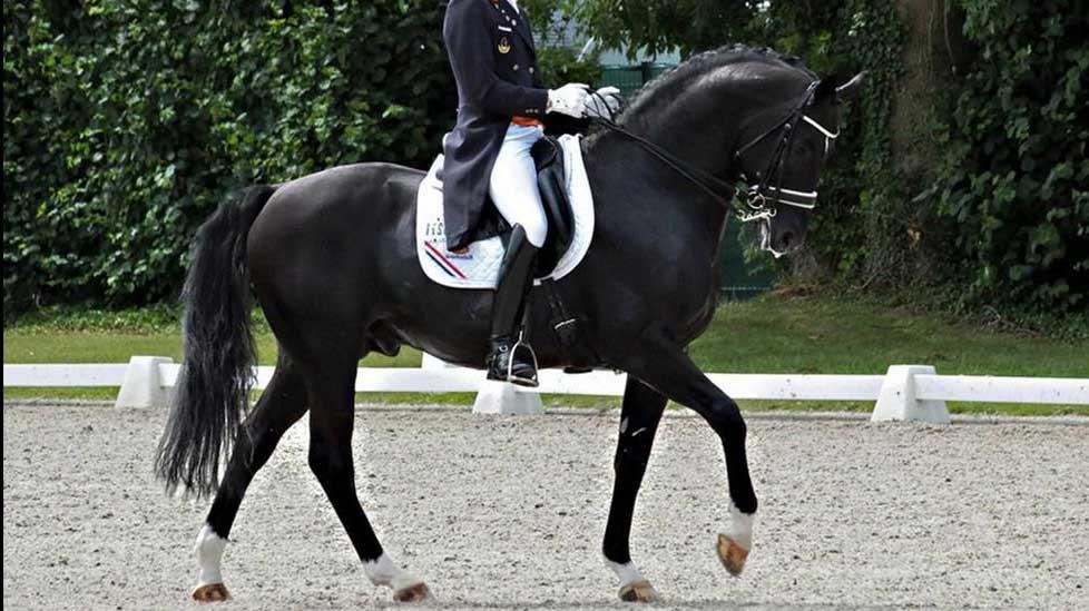 imagenes de los caballos mas caros del mundo