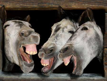 caballos-rien