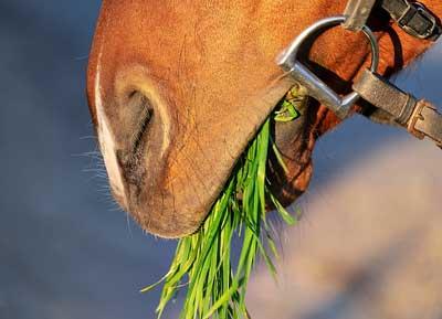 ¿Que darle de comer a un caballo?