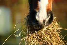 tipos de heno para caballos