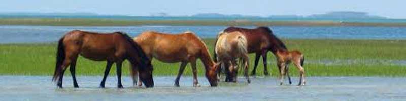 cuantos kilos de pienso debe comer un caballo al dia