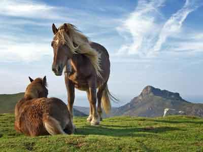 que cantidad de alimento debe comer un caballo