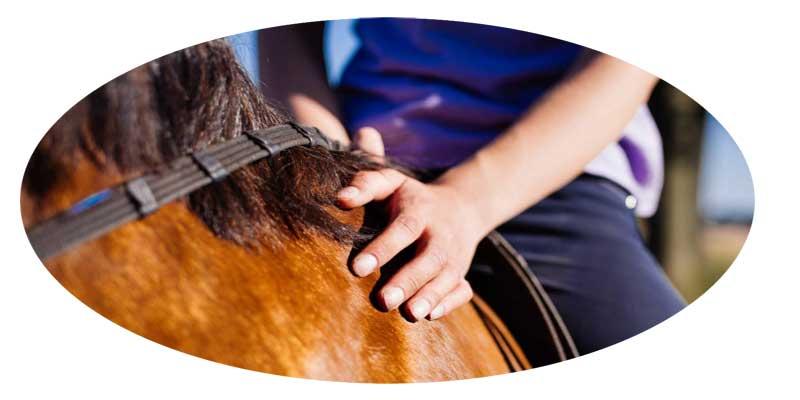 ¿Cómo calmar a un caballo asustado?